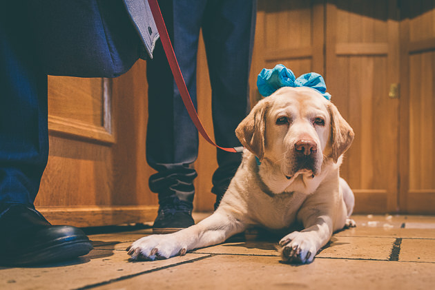 Wedding Dog at Hare and Hounds